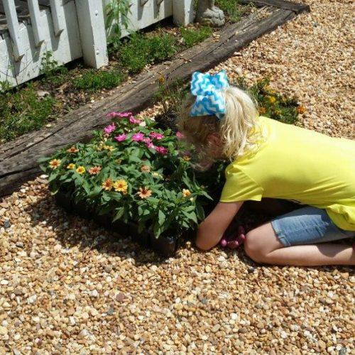 School Gardens Planting