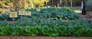 Fall Vegetable Gardening - Virtual Education Series